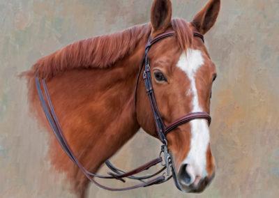 horse final reins_web